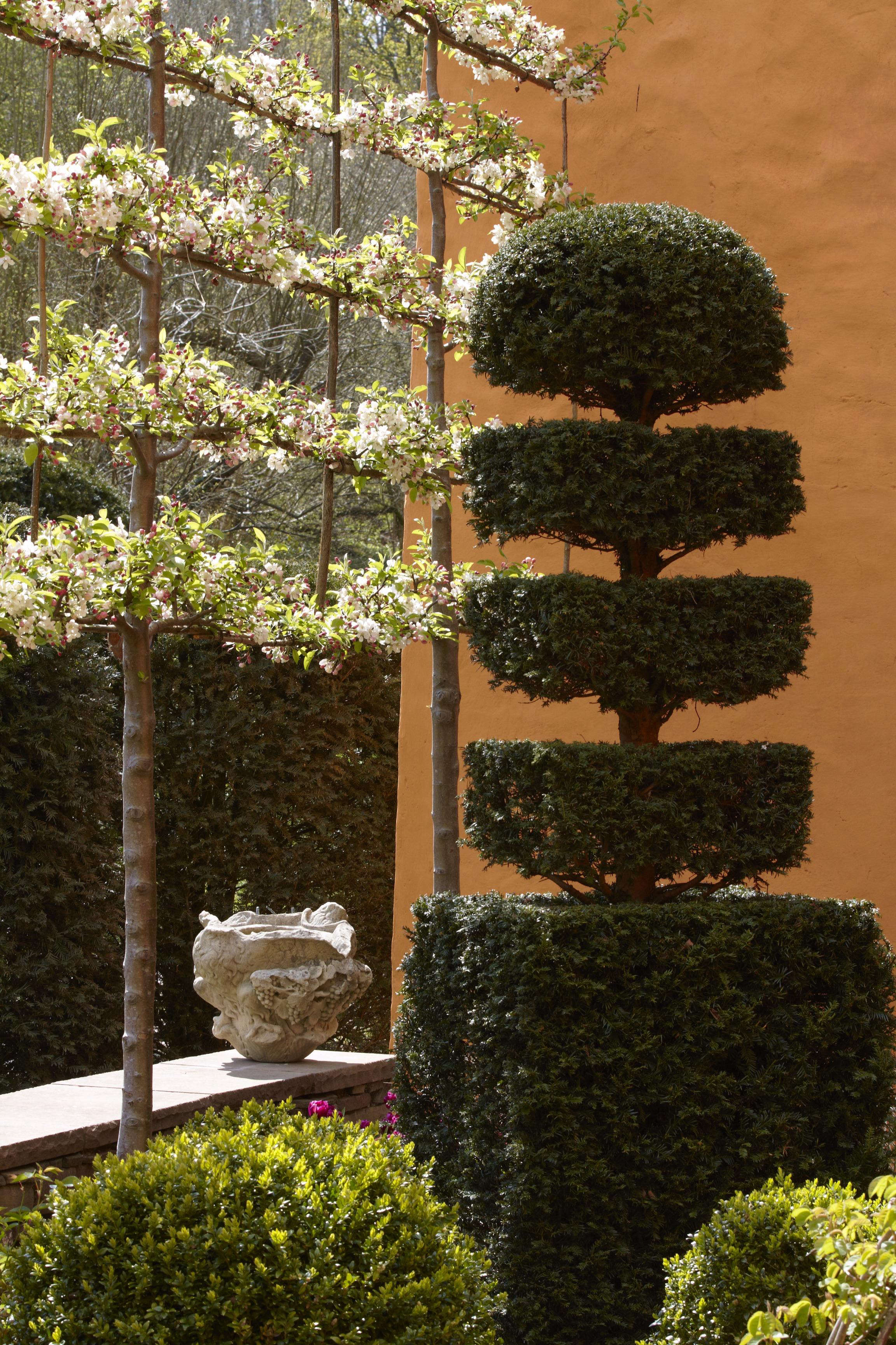 Landscaping 101: Pleached Trees - Gardenista