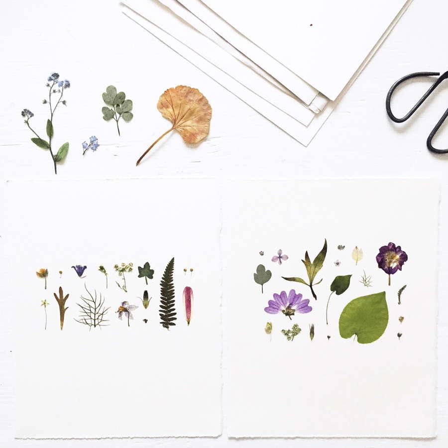 Pressed Flower Artworks From Mr Studio London Gardenista