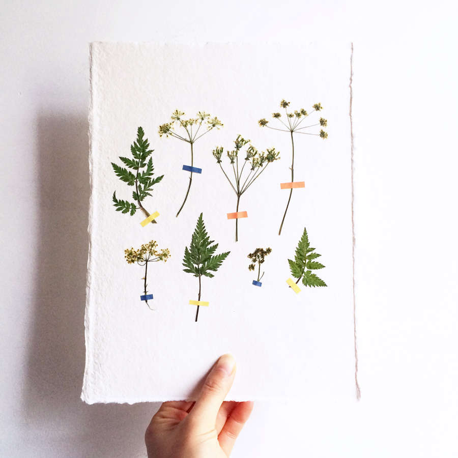 Pressed flower artworks from mr studio london gardenista above each handmade pressed flower artwork is one of a kind mounted on sheets of 6 by 8 inch cotton rag paper and floated on mount board the artworks mightylinksfo