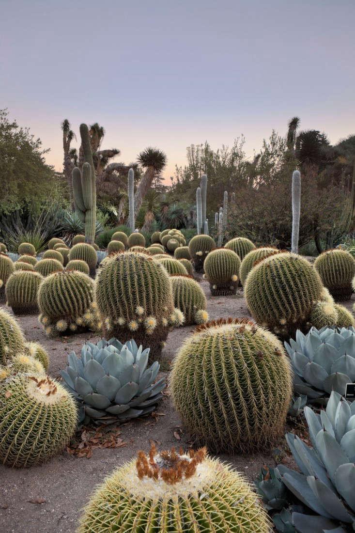 10 Ideas to Steal from Botanical Gardens Around the World - Gardenista