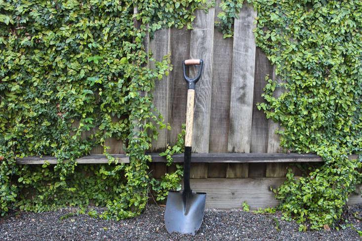 Gardening 101 Creeping Fig Gardenista