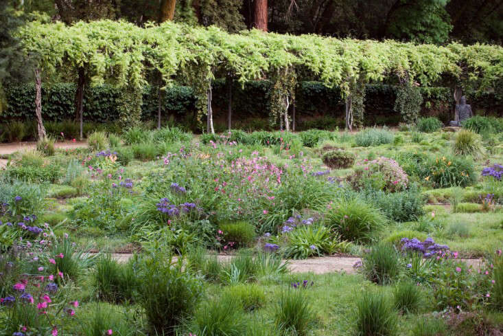 Expert advice 8 tips for a meadow garden from grass guru john bright bursts of perennial color accent a meadow of assorted sedges carex texensis and workwithnaturefo