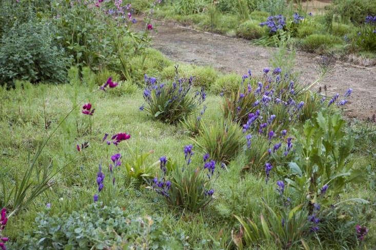 Expert Advice 8 Tips For A Meadow Garden From Grass Guru John