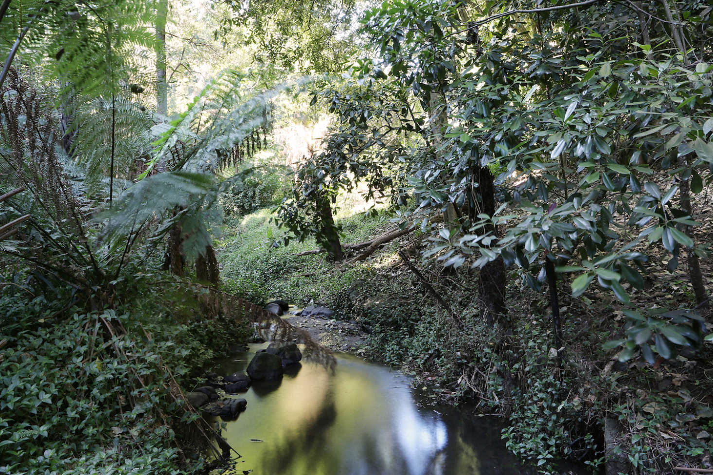 Clematis Creek meanders behind the property;from the residence, you can hear its burble. Wildlife can be spotted here, including wombats, wallabies, the tiny marsupials calledantechinus, and sometimes even platypuses.