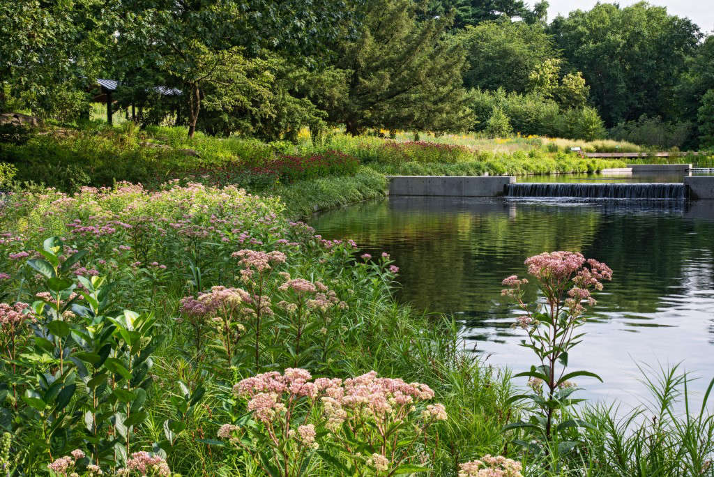 Gardening 101: Milkweed - Gardenista