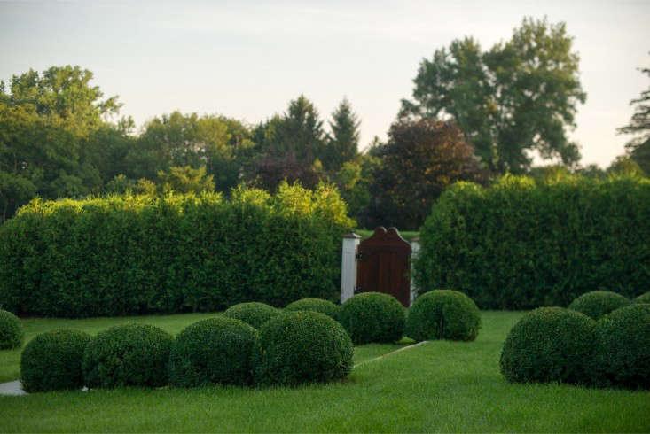boxwood-balls-pattern-janice-parker-landscape-gardenista