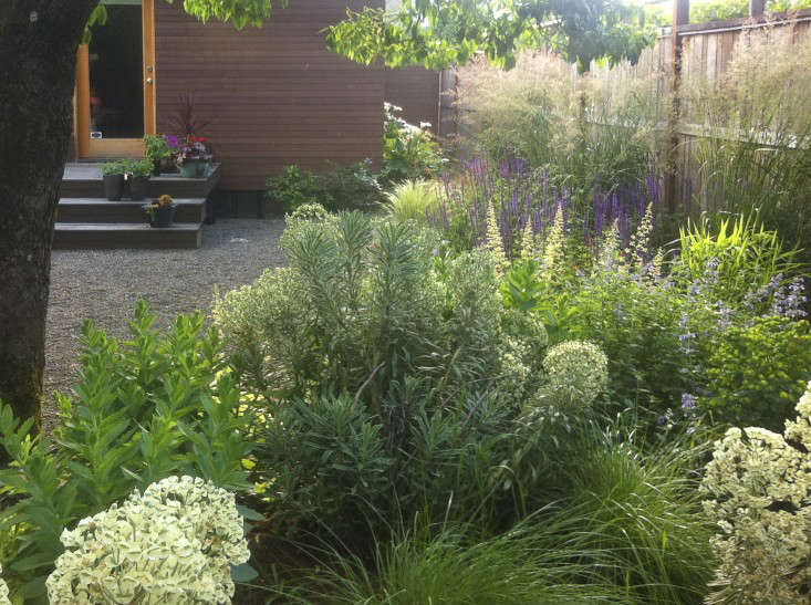 Herbs mix well with perennials such as spurge and salvias, as shown here in the Portland, Oregon garden of Juree Sondker, founder of Horticulture Plant Potion. For more, see Plant Potion: Natural Skin Care from Horticulture.