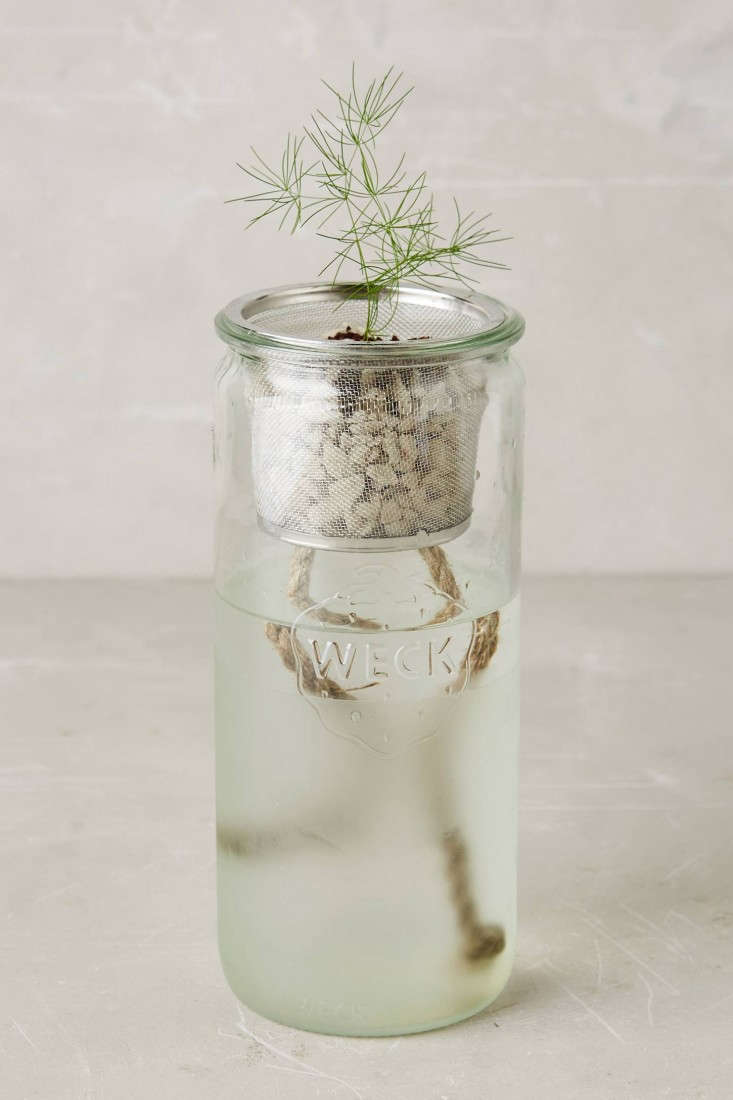 Small Space Gardening A Kit To Grow Windowsill Herbs Gardenista