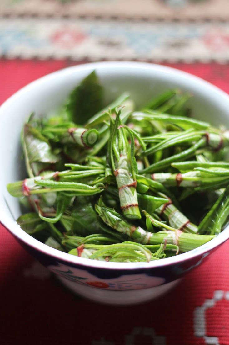 japanese knotweed tips_marie viljoen