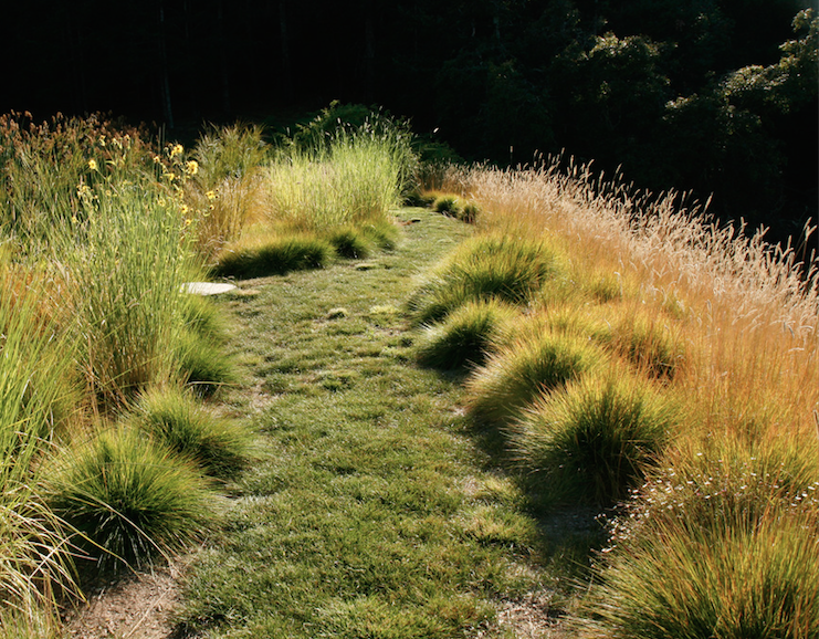 A Meadow With A Mix Of Grasses Chosen For Different Uses. Carex Pansa (along