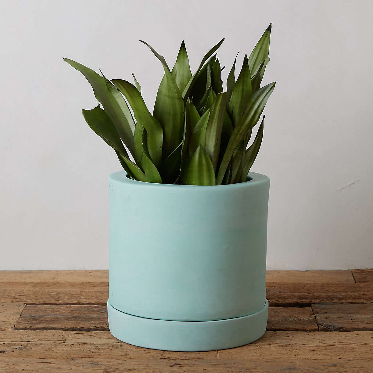 From Terrain, a -inch Pastel Terracotta Pot + Saucer is $8.