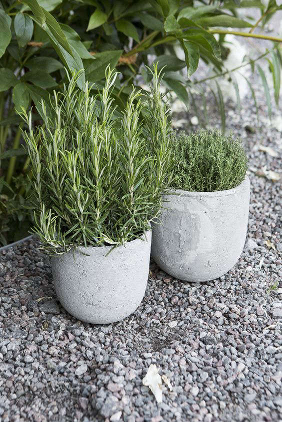 Everything you need to know about herb gardens gardenista rosemary in round concrete herb pots workwithnaturefo