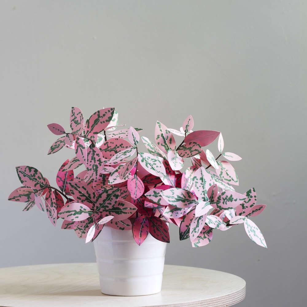 corrie_hogg_polka_dot_paper_plant