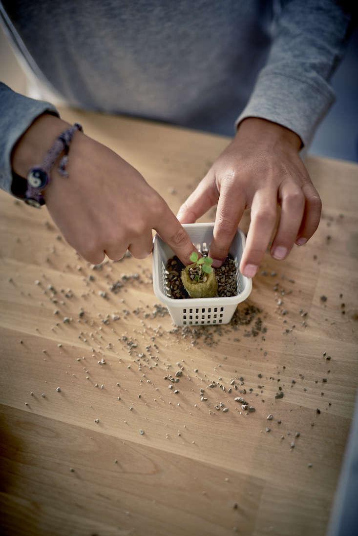 ikea_krydda_vaxer_hydroponics_gardening_kit_gardenista_11346