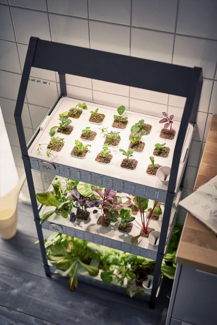 New from Ikea: A Hydroponic Countertop Garden Kit - Gardenista | title