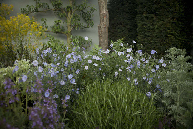 Healing Herbs: A Modern Apothecary Garden at the Chelsea Flower Show ...
