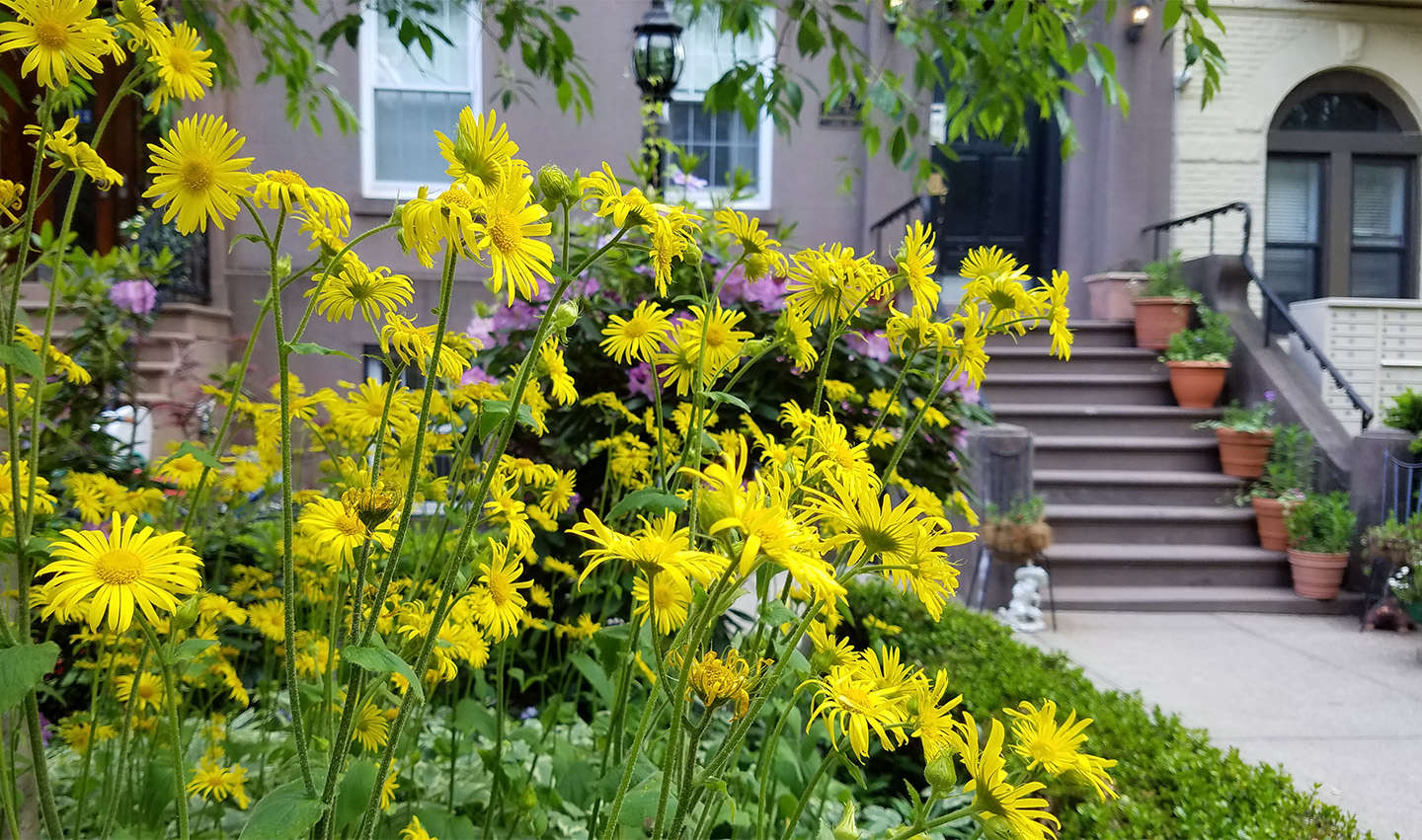 Curb Appeal: 11 Front Garden Ideas to Steal from Brooklyn - Gardenista