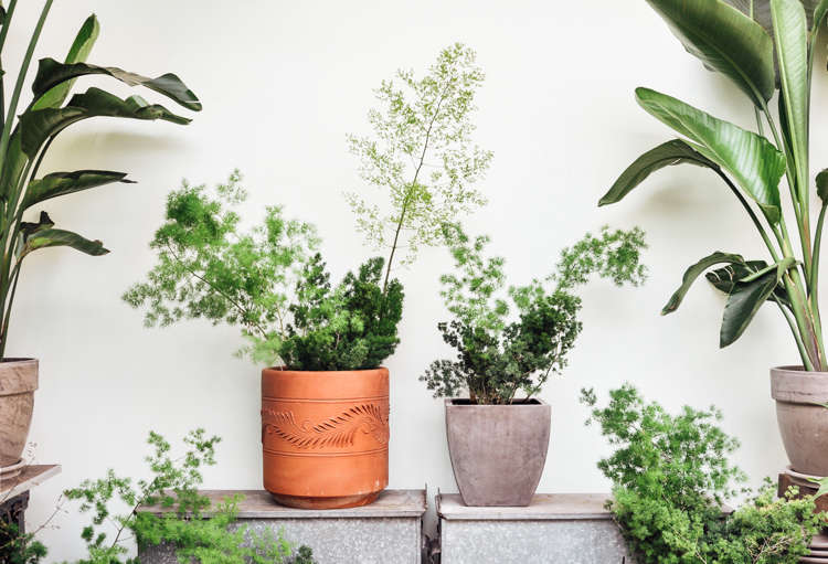 Shopper S Diary A Love Affair With Houseplants At Pistils