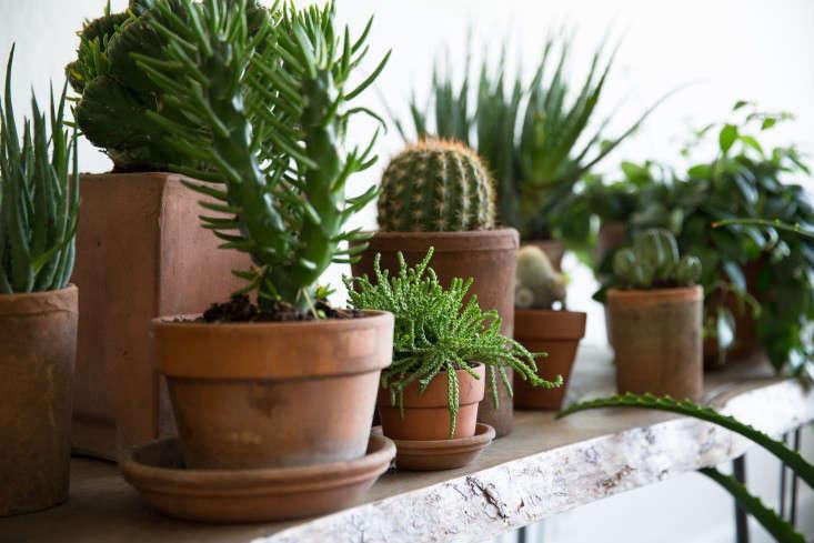 10 Easy Pieces: Best Succulents - Gardenista