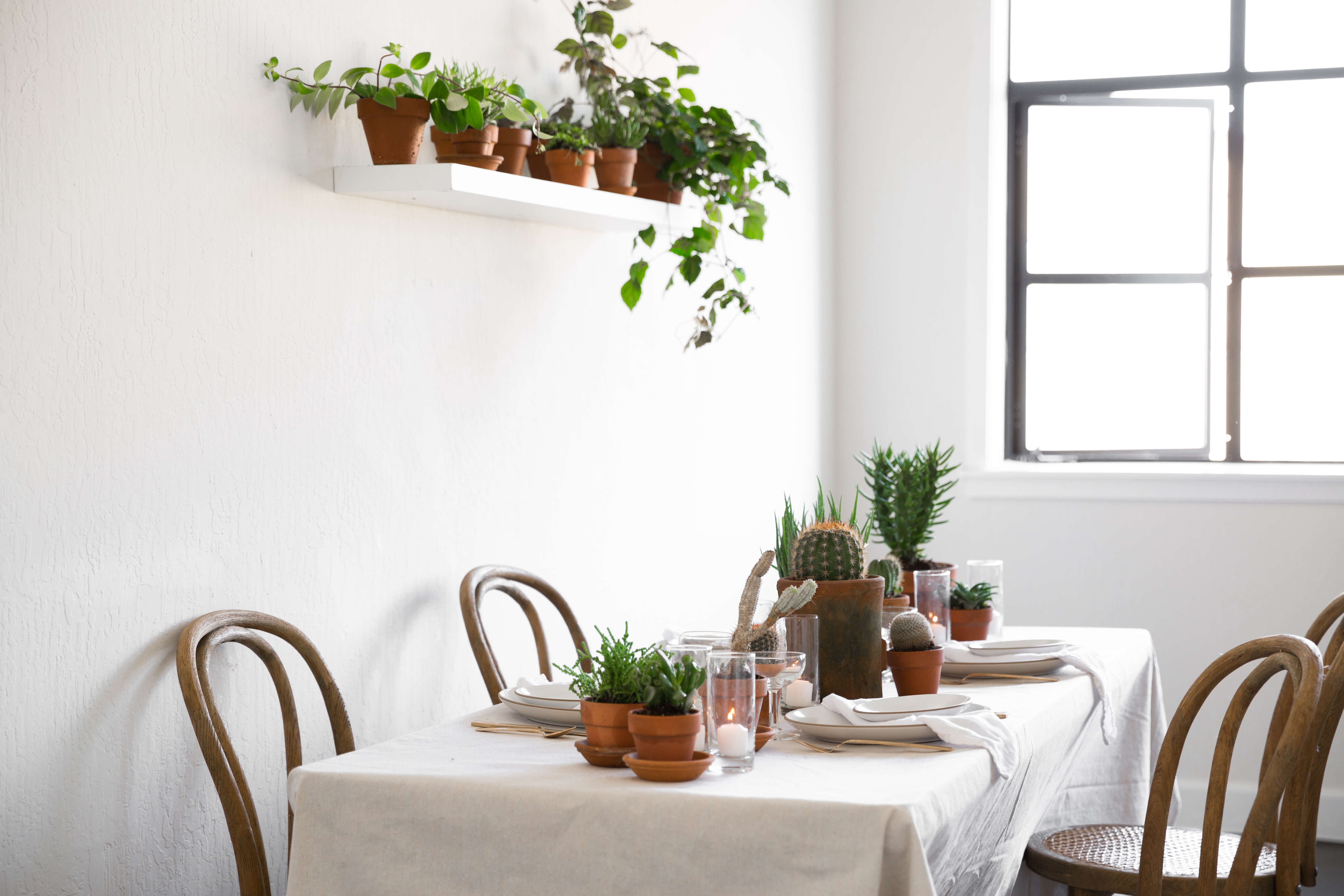 rent a houseplant the plant library delivers gardenista rh gardenista com dining room decorated with plants best dining room plants