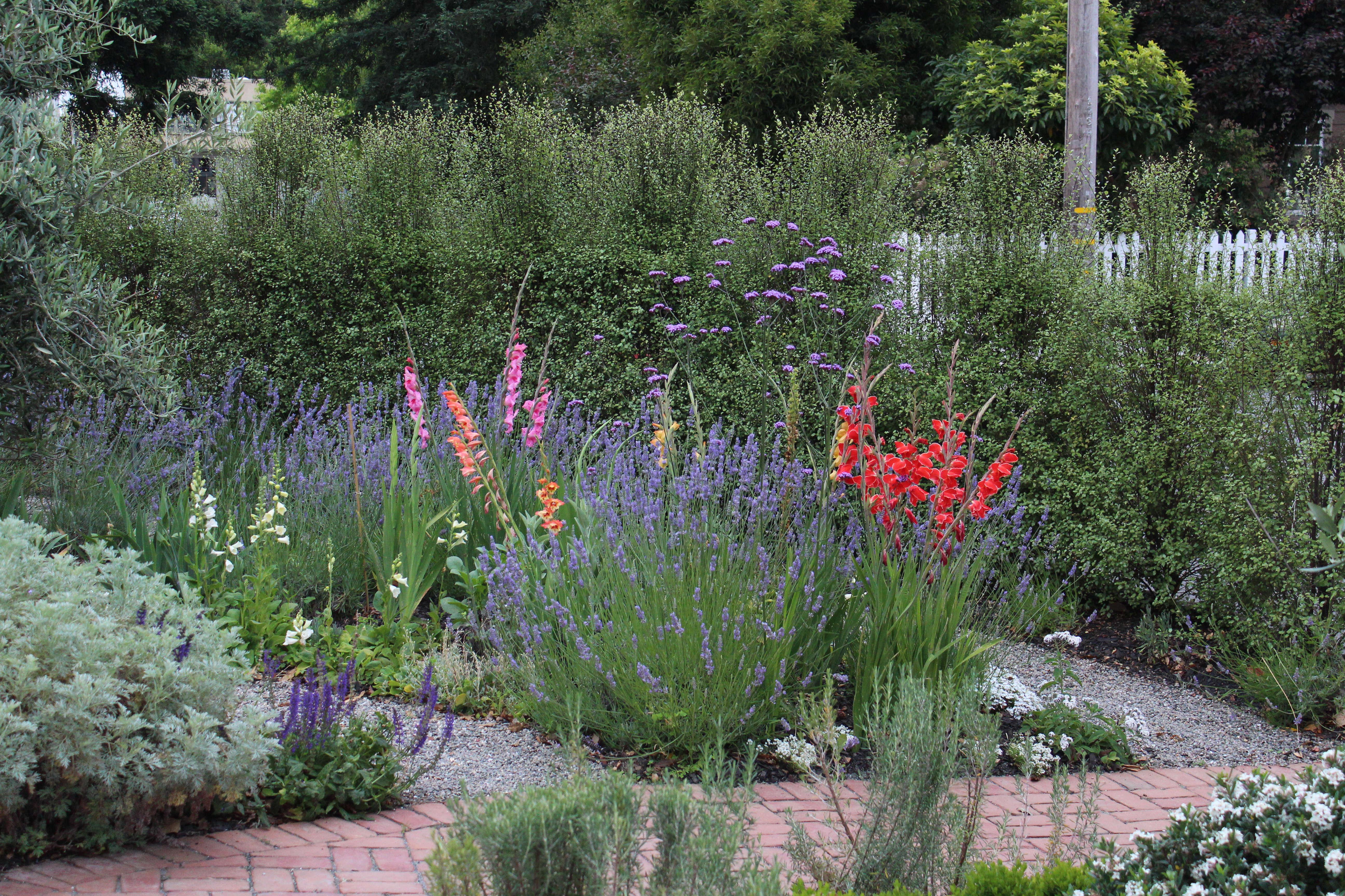 Gladiolus Rethinking A Funeral Flower Gardenista