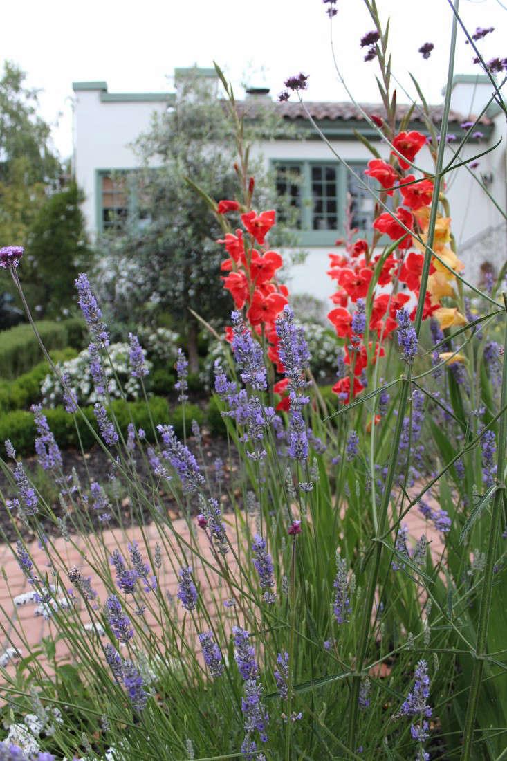 Superior Gladiolas Lavender Michelle House Facade Exterior Gardenista IMG_3288