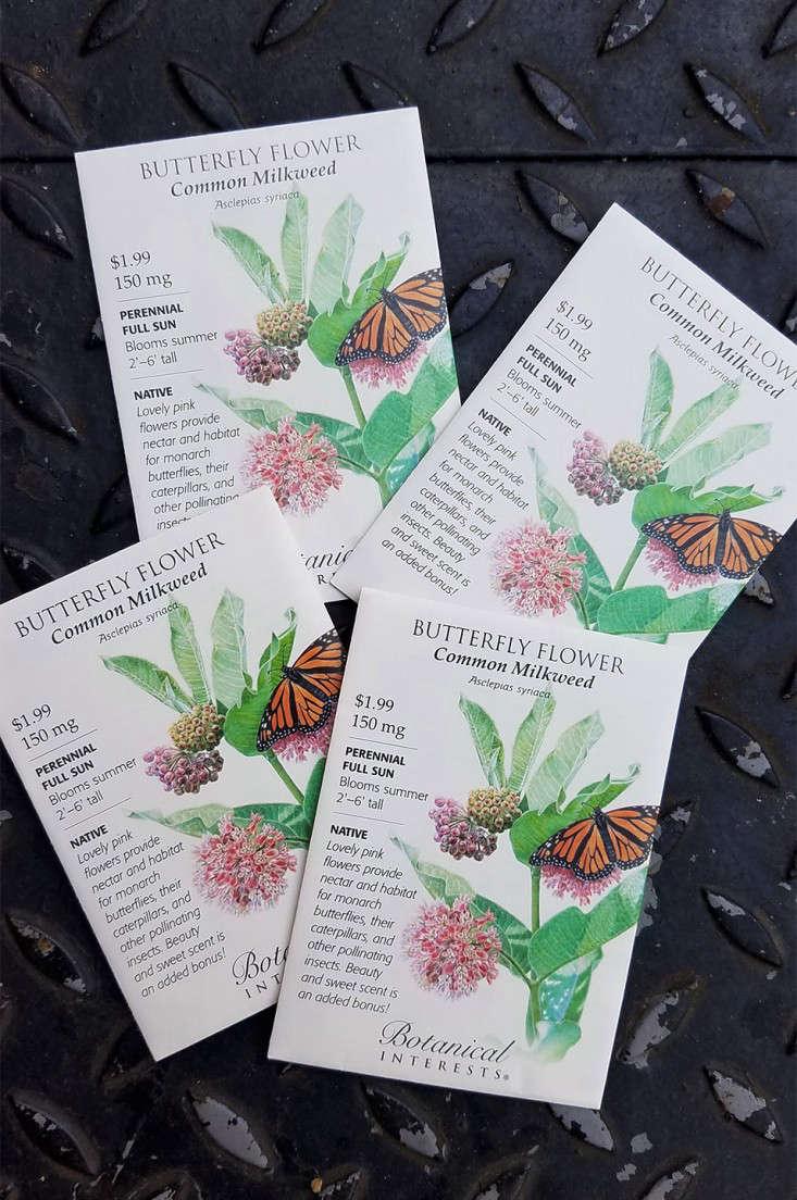 milkweed_seed_marieviljoen_gardenista