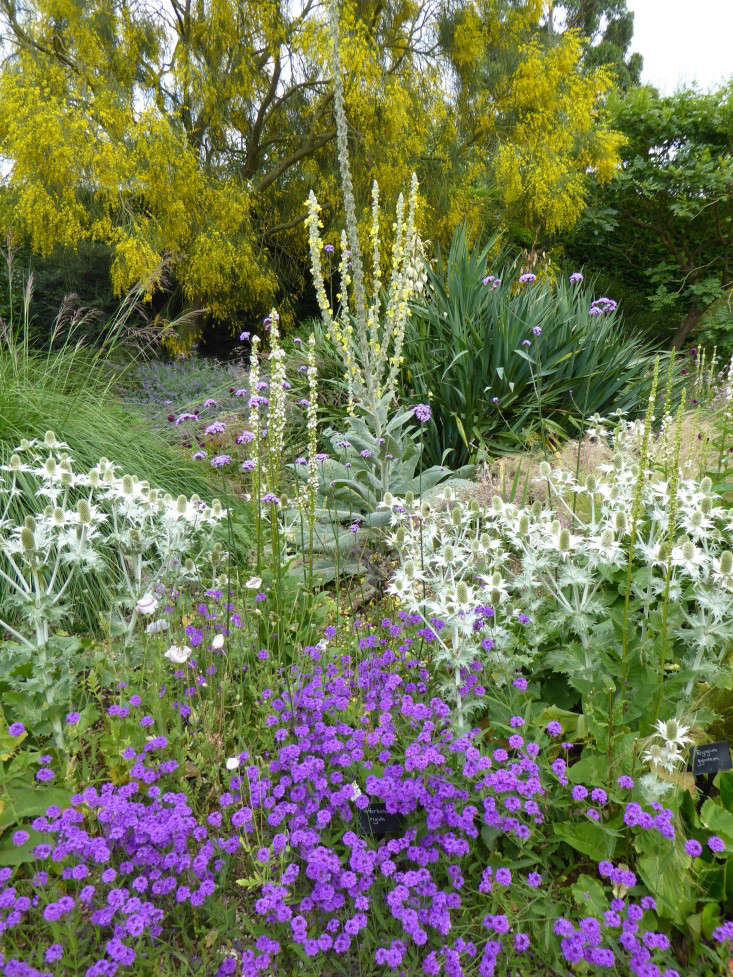 Expert Advice 48 Tips For Gravel Garden Design Gardenista Amazing Gravel Garden Design