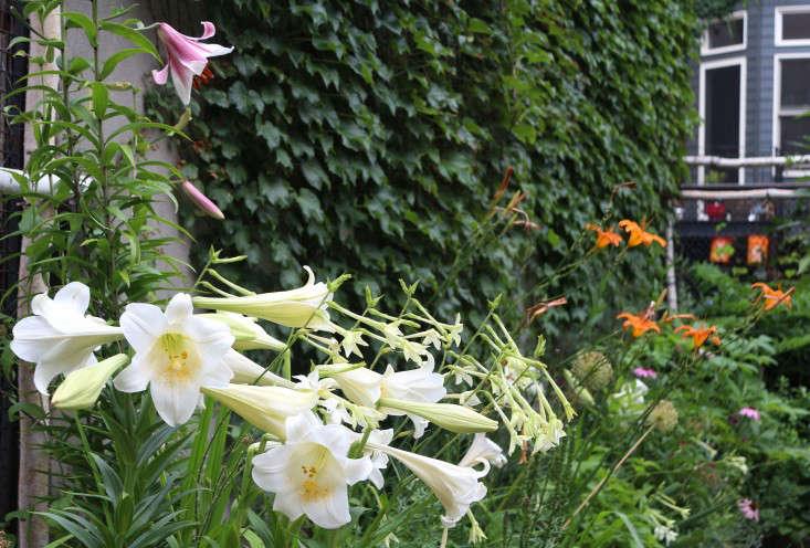 弥莎·坦莎。在花园里,花园里的另一天,在布鲁克林的一座土地上,一年的一步。玛丽·卡弗里的照片。