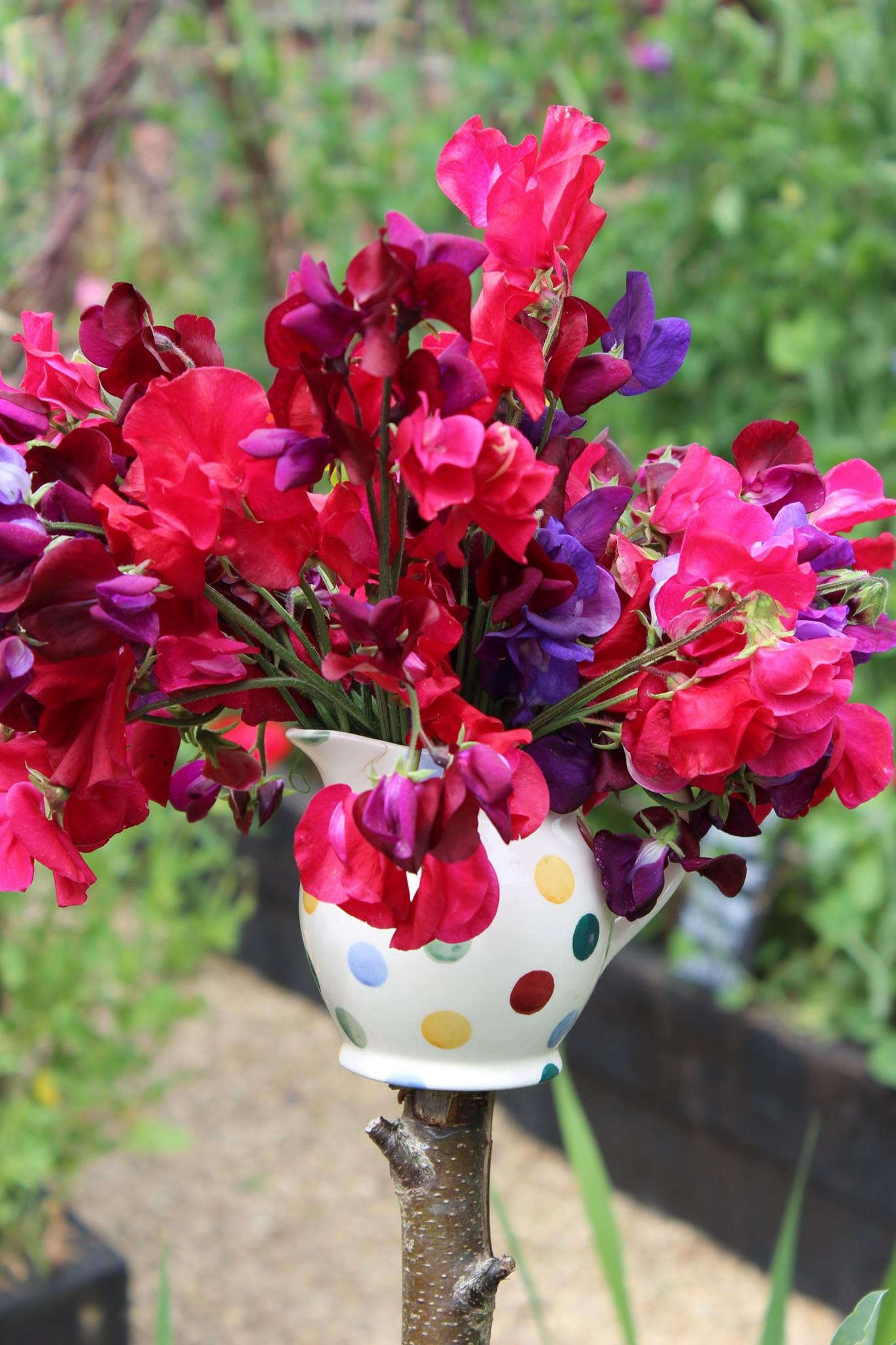 Greatest Garden Visit: A Factory Yard at Emma Bridgewater in Stoke-on-Trent  BV69