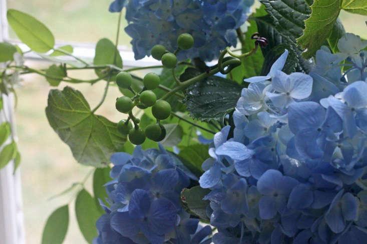 grape-vine-hydrangeas-bouquet-gardenista