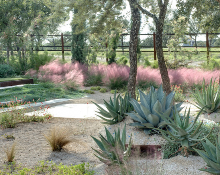 In the Texas hill country, a gravel garden designed by D-Crain relies on the inviting shapeof pink Muhlenbergia to visuallysoften the sharper edges of nearbysucculents. Photograph courtesy of D-Crain.