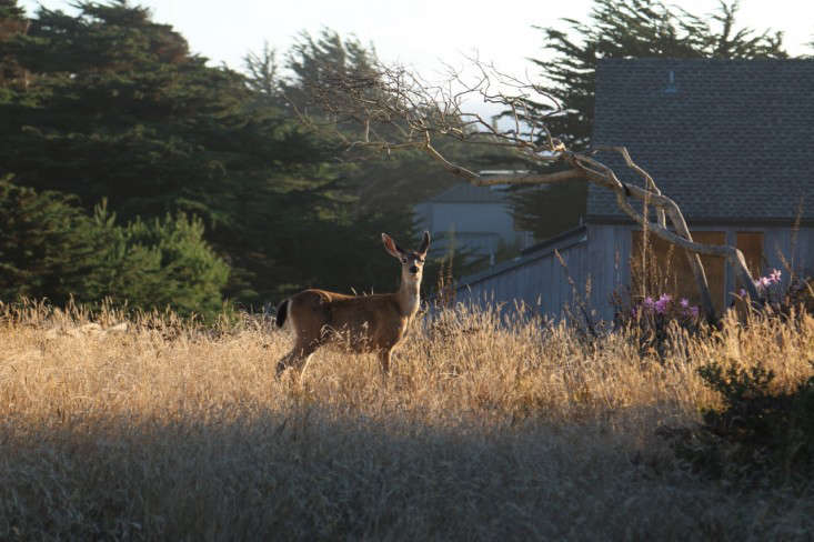 10 Garden Ideas To Steal From Sea Ranch In Northern