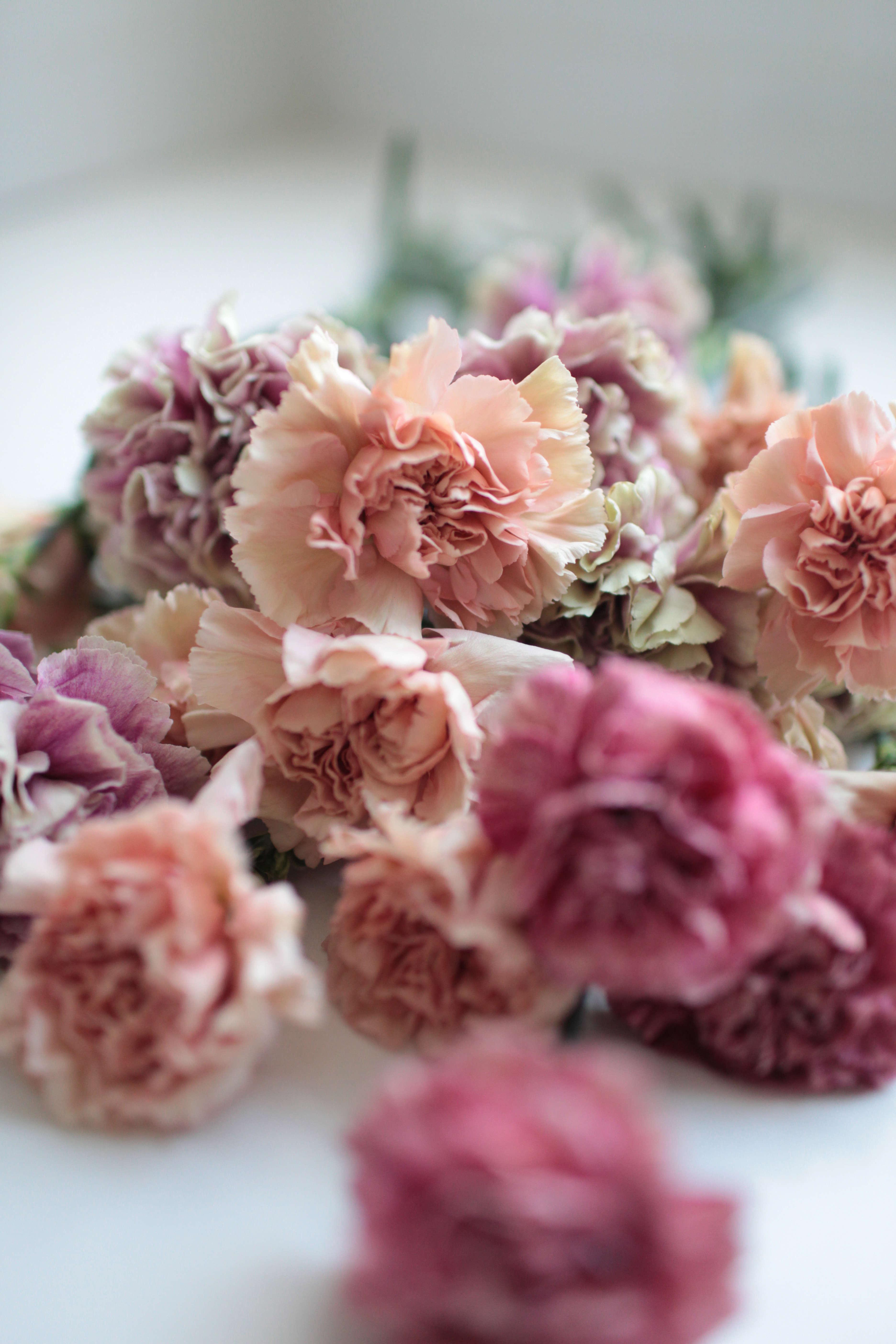 Carnations rethinking a supermarket flower gardenista carnations rethinking a supermarket flower izmirmasajfo