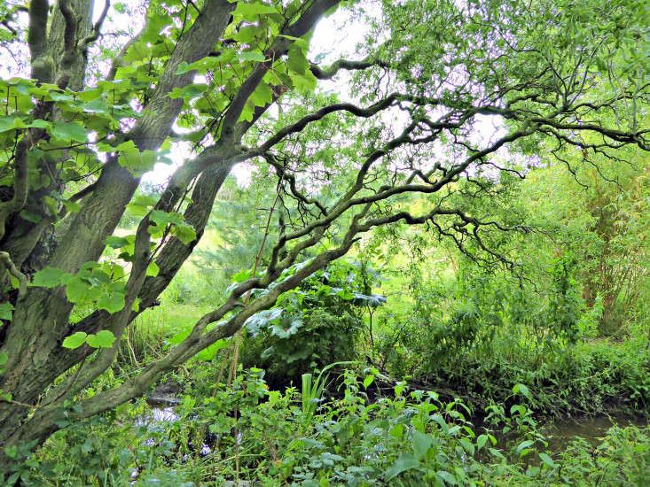 A corkscrew willow, Salix tortuosa, was transplanted from Jen&#8