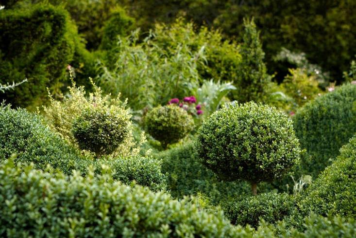 Stylish Contemporary Box Ball Plants Pair of Topiary Buxus Balls