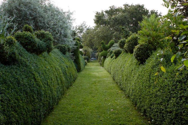 Superb English Boxwood Topiary Hedges Bird Mown Path Britt