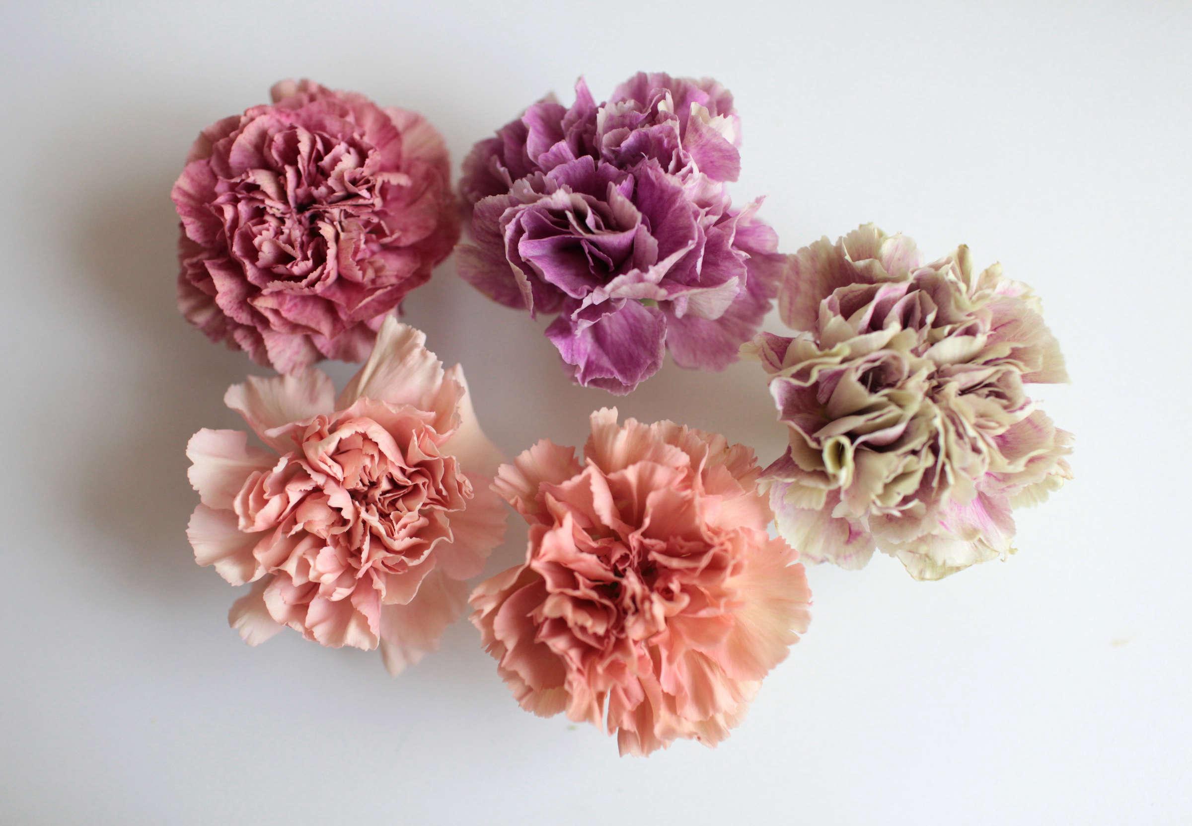 Carnations: Rethinking a Supermarket Flower - Gardenista
