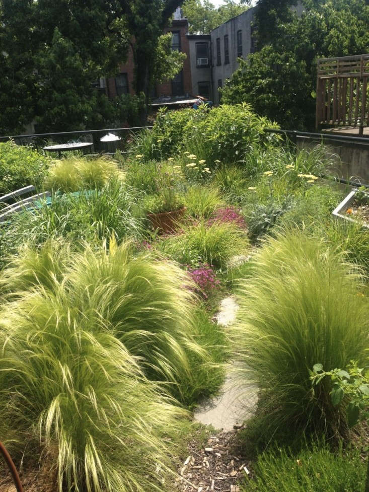 Gossamer Gardens 11 Ideas For Landscaping With Mexican Feather