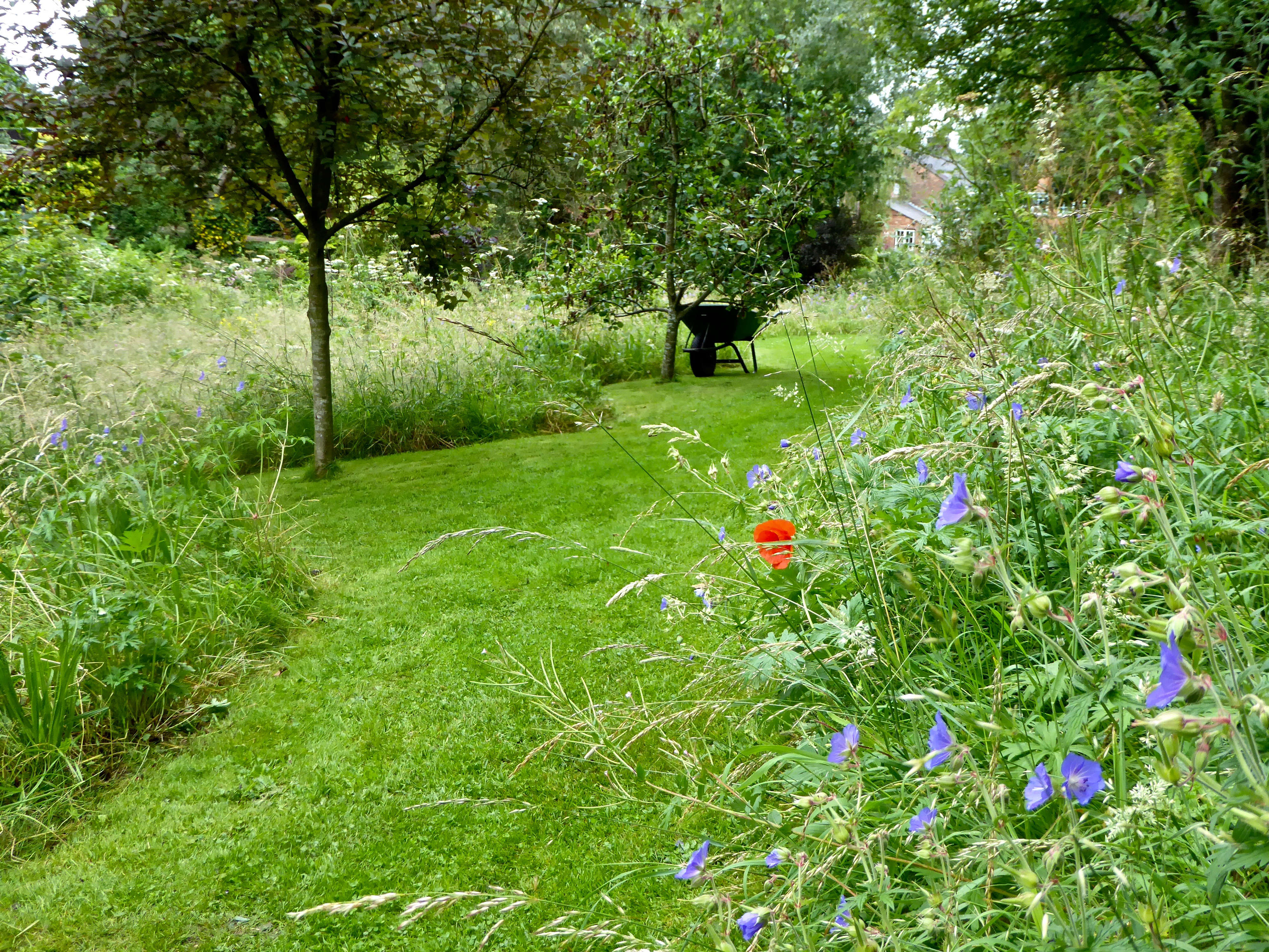 Garden Visit A Wildflower Meadow At The Edge Of An English