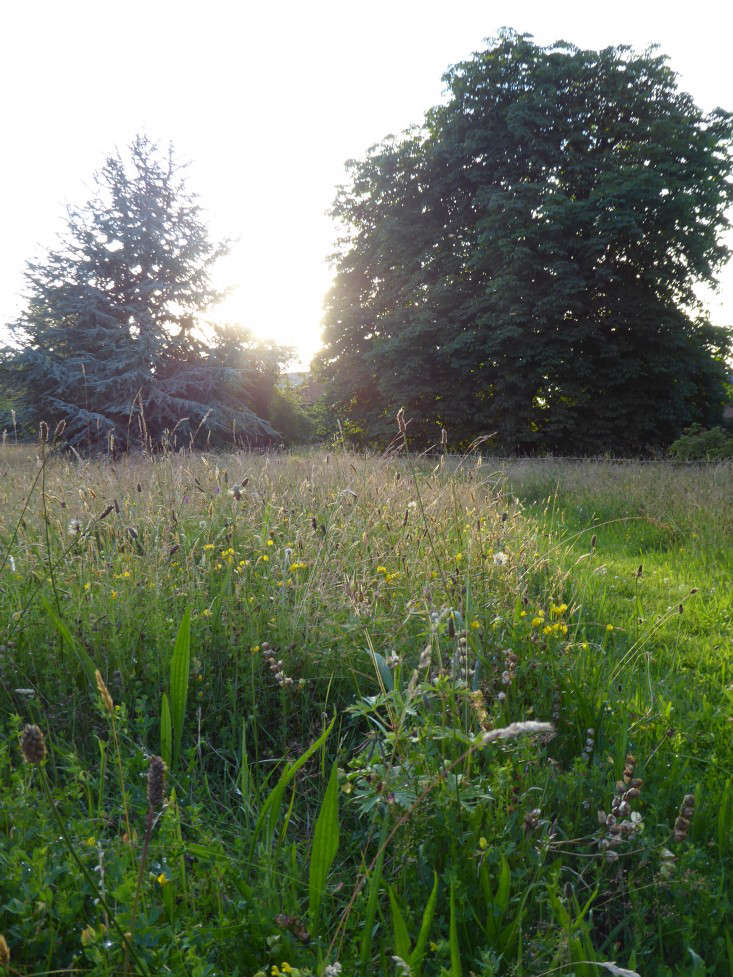 Acres of wildflower meadows with mown paths, traditional metal estate fencing, and specimen trees surround the house.