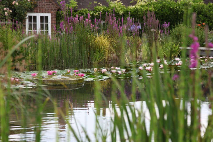 newark-natural-pool-ensata-waterlilies-liatris-gardenista