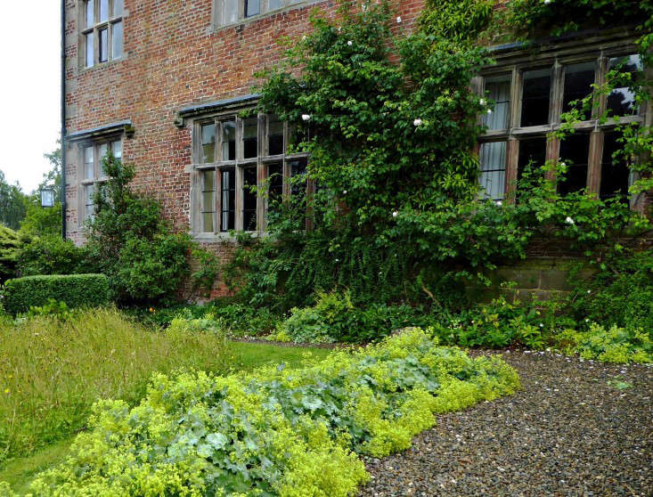 A swath of acid Alchemilla mollis borders the house and defines the edge of the wildflower meadow.