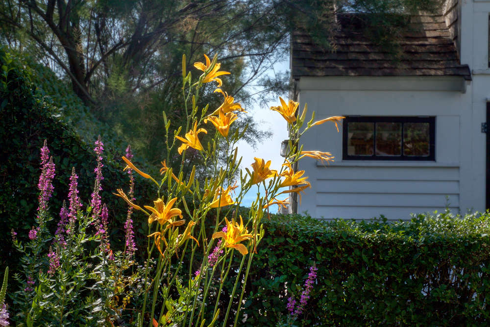 10 Ideals to Stral from Ptown Gardens, giant day lilies, Gardenista