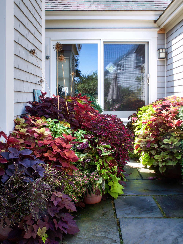 10 ideas to steal from ptown gardens collius gardenista