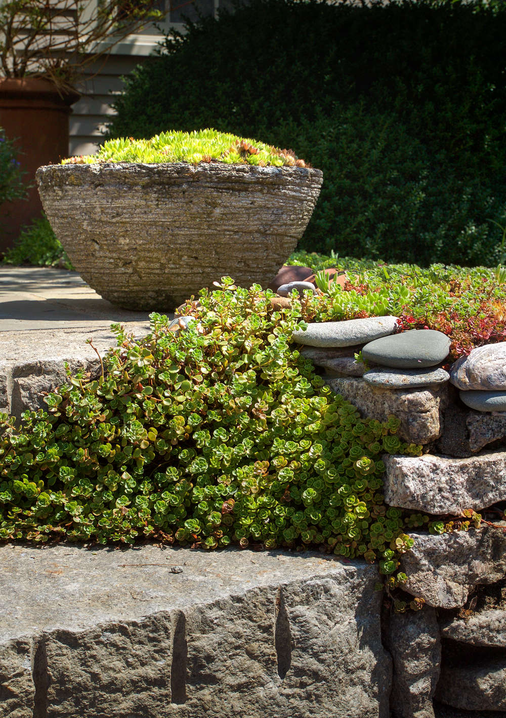 10 Ideas to Steal from Ptown Gardens, stepping stones, Gardenista