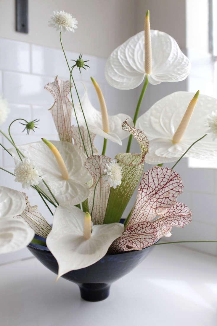 anthuriums - Garden Design Trends 2016