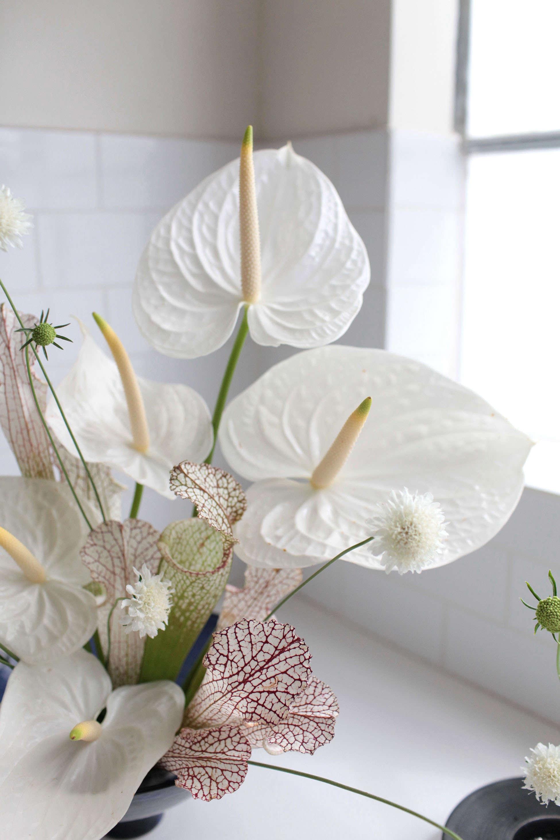Anthuriums Rethinking A Hotel Lobby Flower Gardenista