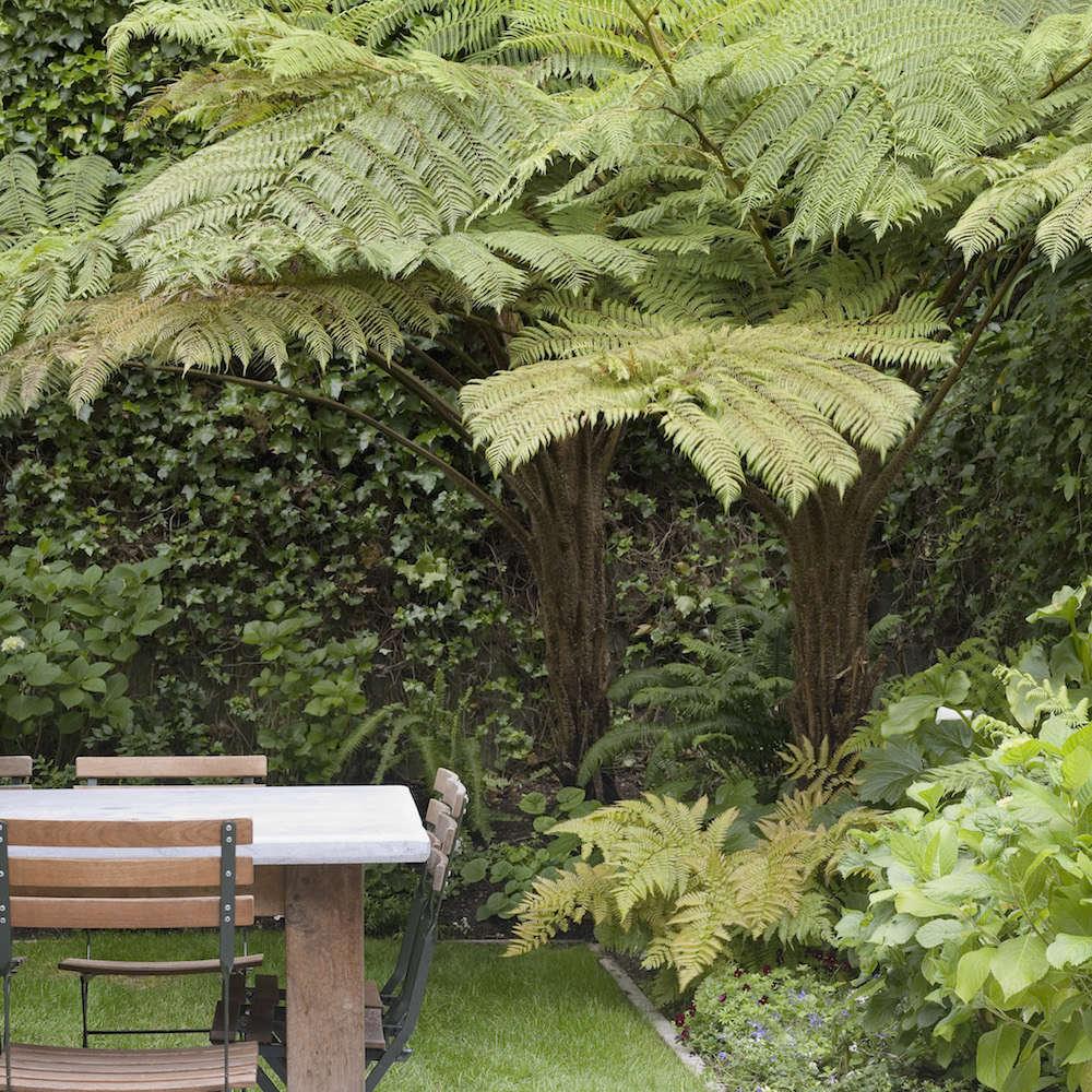 Scott Lewis Landscape San Francisco Garden   Gardenista