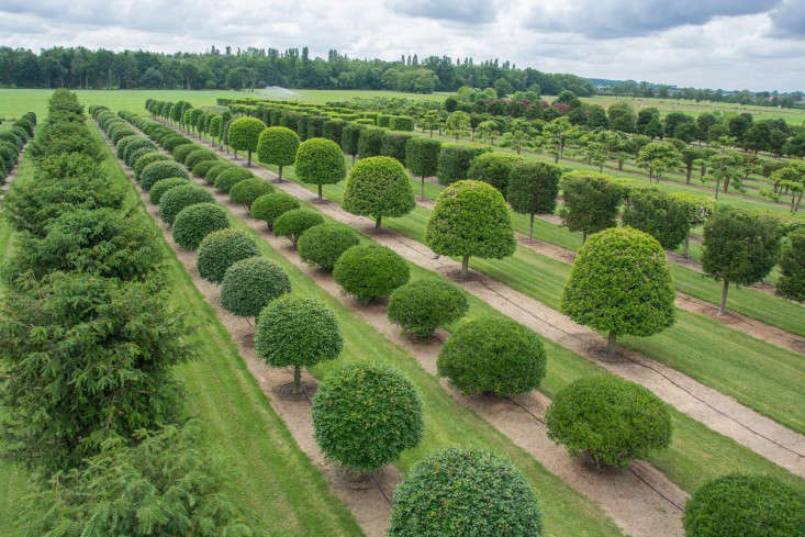 For  years, Solitair Nursery has cultivated stand-alone trees at its plots in Loenhout, Belgium. Solitair&#8